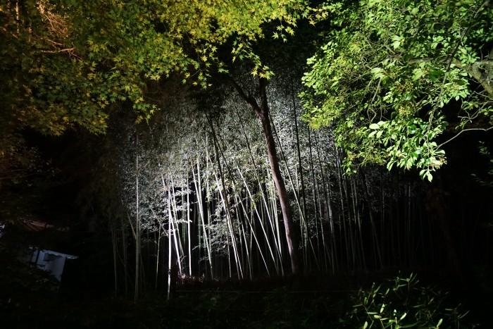 宝厳院竹林