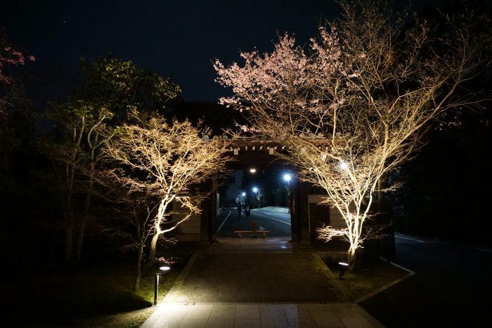京都 夜桜
