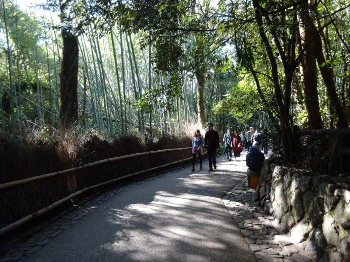 嵐山 竹林